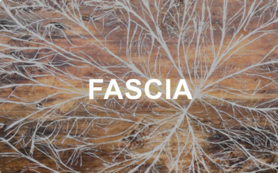 What is Fascia and How Does it Affect Me?